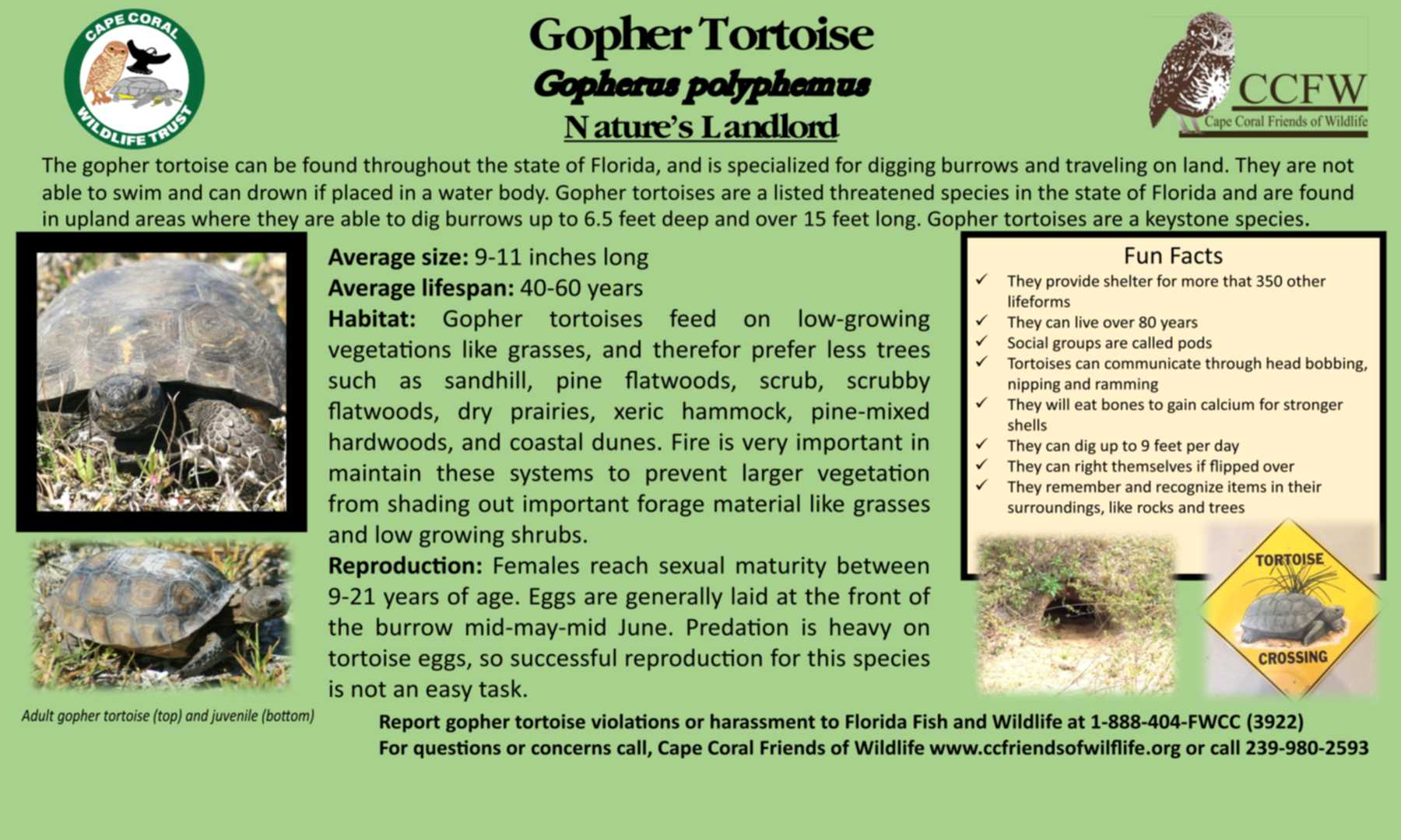 gopher tortise flyer